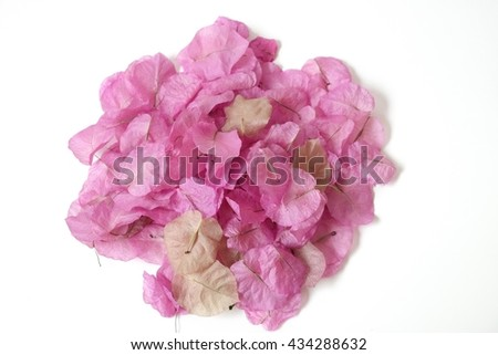Bougainvilleas pink dry flower on white background - stock photo