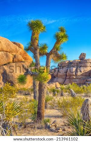 Boulders and Joshua Trees in Joshua Tree National Park, California. - stock photo