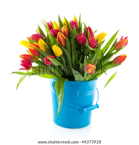 bouquet colorful tulips in blue bucket and white background