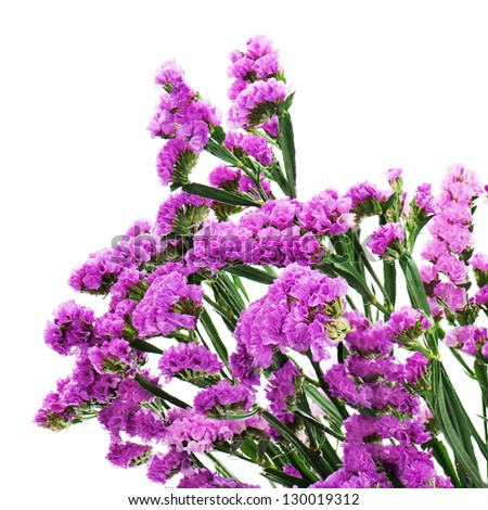 Bouquet from purple statice flowers arrangement centerpiece isolated on white background. - stock photo