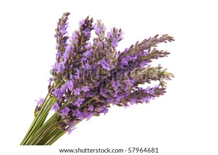 Bouquet Lavender from the Provence isolated over white