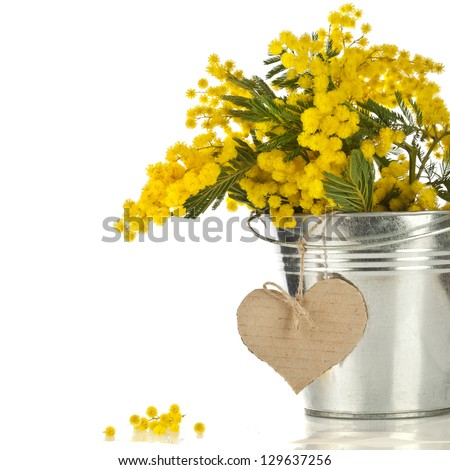bouquet mimosa acacia flowers with  heart note card in a bucket of zinc, decorative card isolated on white - stock photo