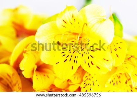 bouquet of alstroemeria flower