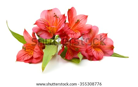 Bouquet of alstroemeria flowers isolated on white background - stock photo