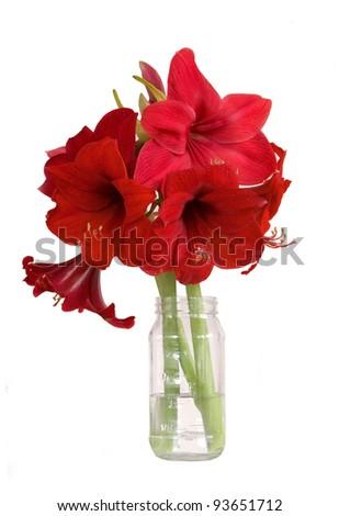 bouquet of amaryllis flowers - isolated on white - stock photo