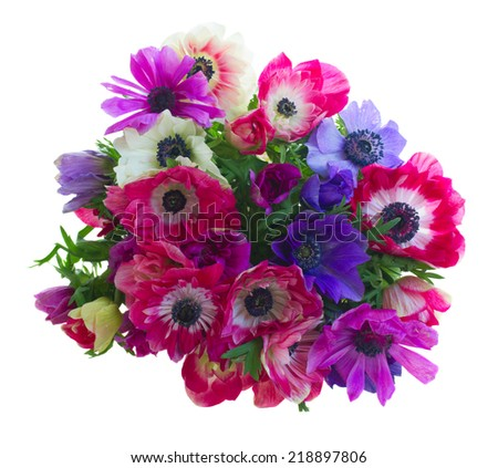 bouquet of anemone flowers  isolated on white background