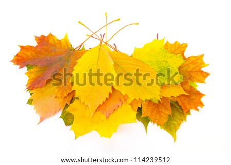 Bouquet of autumn leaves