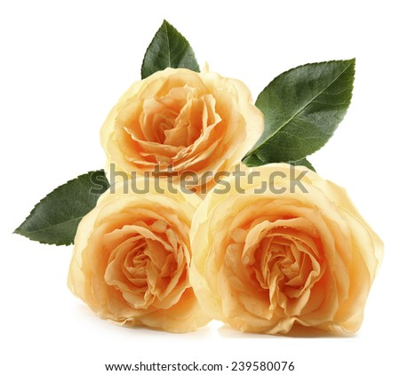 Bouquet of beautiful yellow roses isolated on white - stock photo