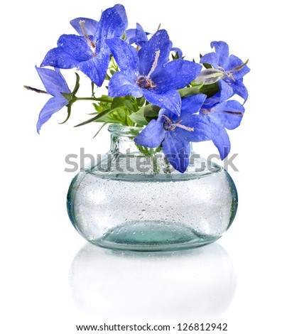 bouquet of blue  campanula flowers in glass bottle  isolated on white background - stock photo