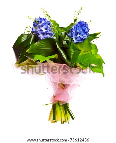bouquet of blue geotsints isolated over white background - stock photo