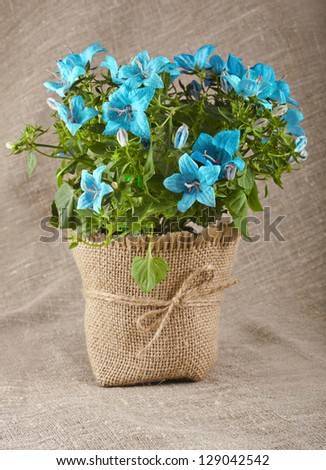 bouquet of blueflowers on natural linen canvas texture backdrop with copy space for text - stock photo