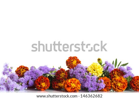 bouquet of bright Marigolds on white background - stock photo