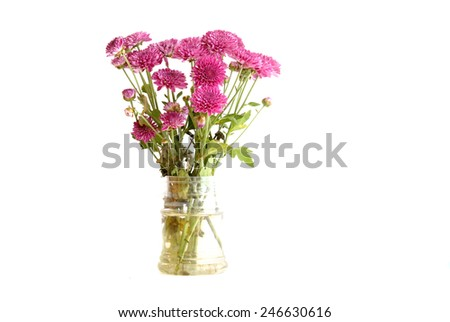 Bouquet of chrysanthemum flowers in glass vase - stock photo