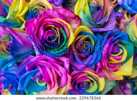 Multicolor rose flower bouquet rainbow rose stock photo for Rainbow dyed roses