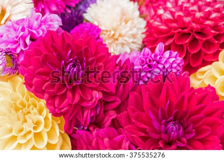 Bouquet of colorful asters - stock photo
