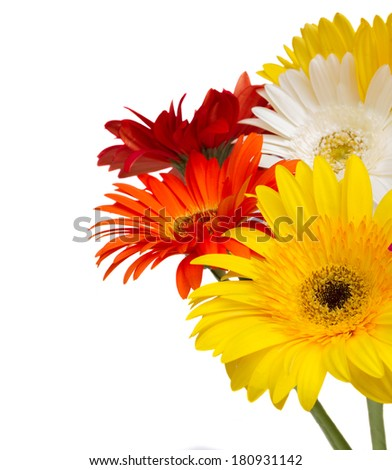 bouquet of colorful  gerbera flowers isolated on white background - stock photo