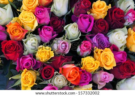 Different color roses stock photos images pictures for Different color roses bouquet
