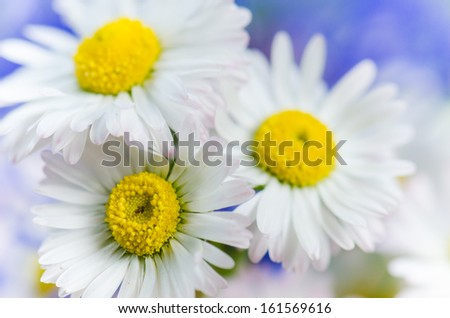 Bouquet of daisies and cornflowers  - stock photo