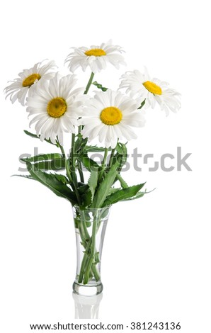 bouquet of daisies on white background - stock photo