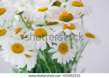 Bouquet of daisy-chamomile flowers - stock photo