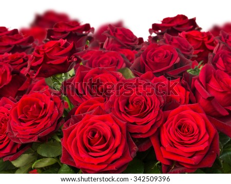 bouquet of dark red roses  close up  isolated on white background - stock photo