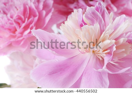 Bouquet of different pink peonies on a white background closeup