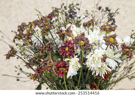 bouquet of dried flowers - stock photo
