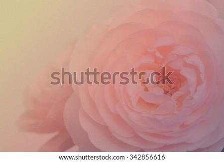 Bouquet of English roses soft style in pastel tones with paper texture for the background.