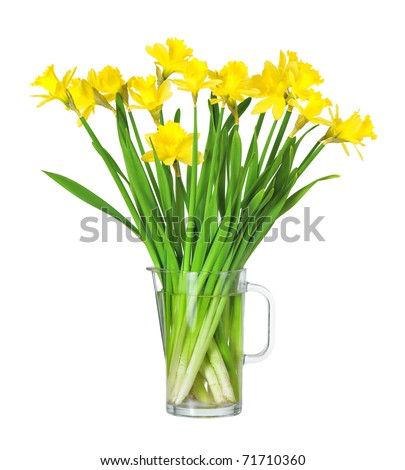 Bouquet of flowers of Daffodils in a glass pitcher on white background - stock photo