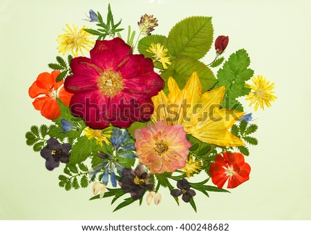 Bouquet of flowers on a light background. Pressed, dried rosehip flowers, pumpkin, geranium, violet, dandelion, clover and lupine. Picture from dry flowers. - stock photo