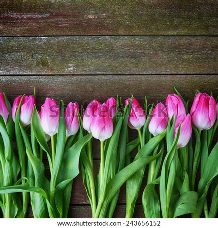 bouquet of fresh pink tulips on  wooden background - stock photo