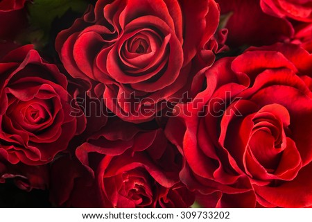 Bouquet of fresh roses, flower bright background. - stock photo