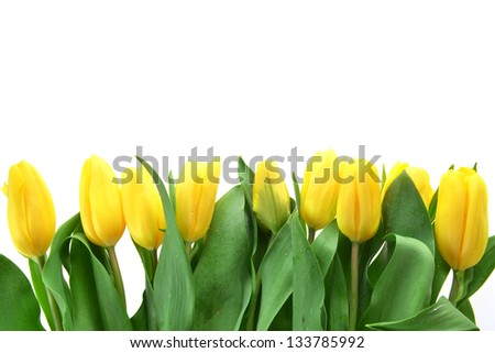 bouquet of fresh yellow tulips in vase