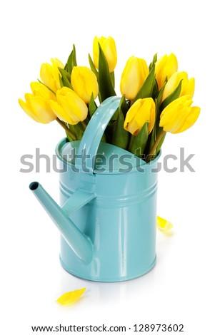 bouquet of  fresh yellow tulips on white background - stock photo
