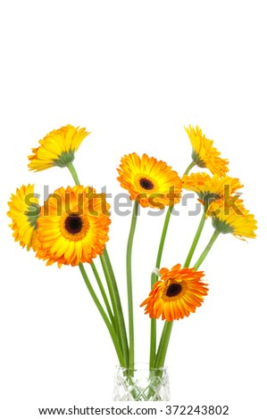 Bouquet of gerber flowers on white background - stock photo