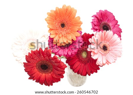 bouquet of gerberas on white background