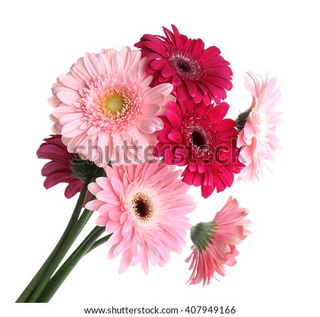 Bouquet of gerbers isolated on white - stock photo