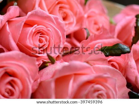 Bouquet of gift wrapped pink roses symbolic of love, romance, Valentines Day, Mothers Day or anniversary on a rustic wood background with copy space - stock photo