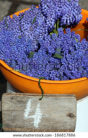 Bouquet of Grape hyacinth in vase. Flower shop. - stock photo