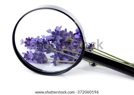 Bouquet of lavender flowers behind magnifying glass over white background - stock photo