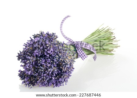 bouquet of lavender flowers cut on white background  - stock photo