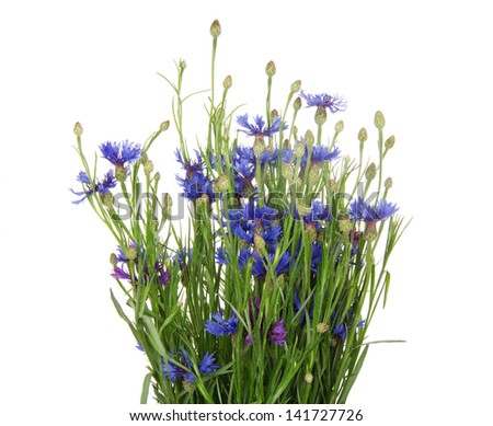 Bouquet of many beautiful cornflowers flowers isolated on white