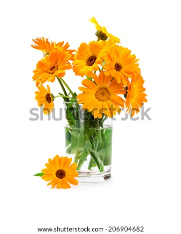 Bouquet of marigold in glass vase isolated on white background - stock photo