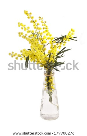bouquet of mimosa (acacia) flowers in a bottle isolated on a white background  - stock photo