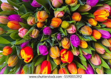 Bouquet multicolor tulips fresh spring flowers stock photo royalty bouquet of multicolor tulips fresh spring flowers mightylinksfo