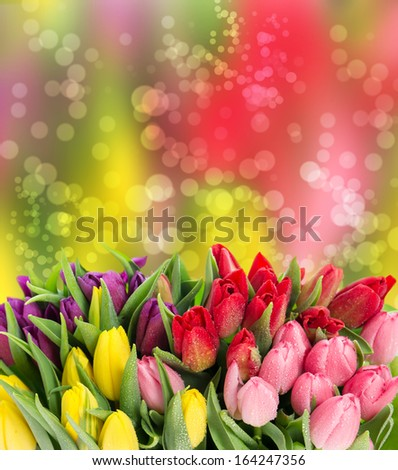 bouquet of multicolor tulips. fresh spring flowers with water drops. floral background with bokeh effect