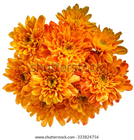 Bouquet of orange chrysanthemums isolated on pure white background. - stock photo
