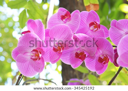 Bouquet of pink flowers orchids - stock photo