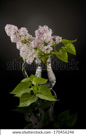 Bouquet of pink lilac flowers in a glass vase with a reflection (on a background) - stock photo