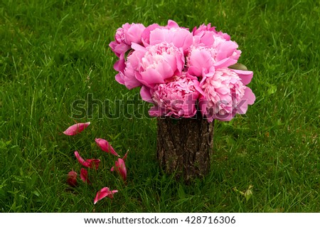 Bouquet of pink peonies in vase with fallen petals on the green grass - stock photo